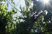 "Flea ""Helen Burns"" - recenzja muzyczna"